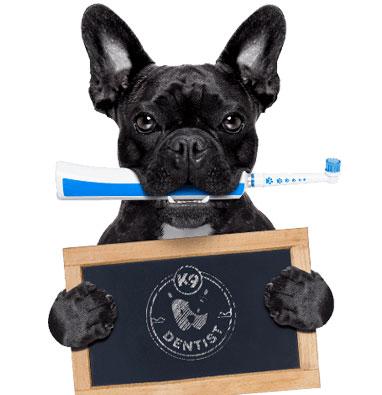 K9 Dentist Dog